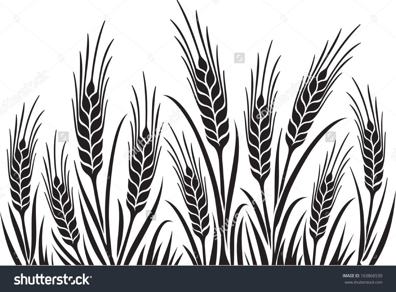 Barley Illustration Field Of Wheat Or Rye Vector