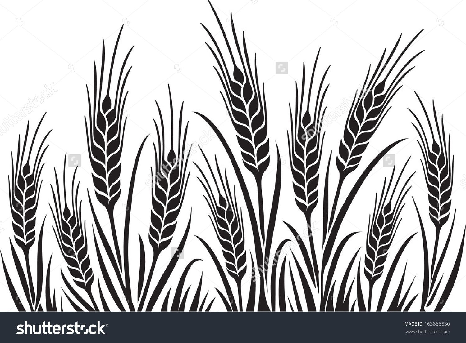 Barley Illustration Field Of Wheat Barley Or Rye Vector Visual