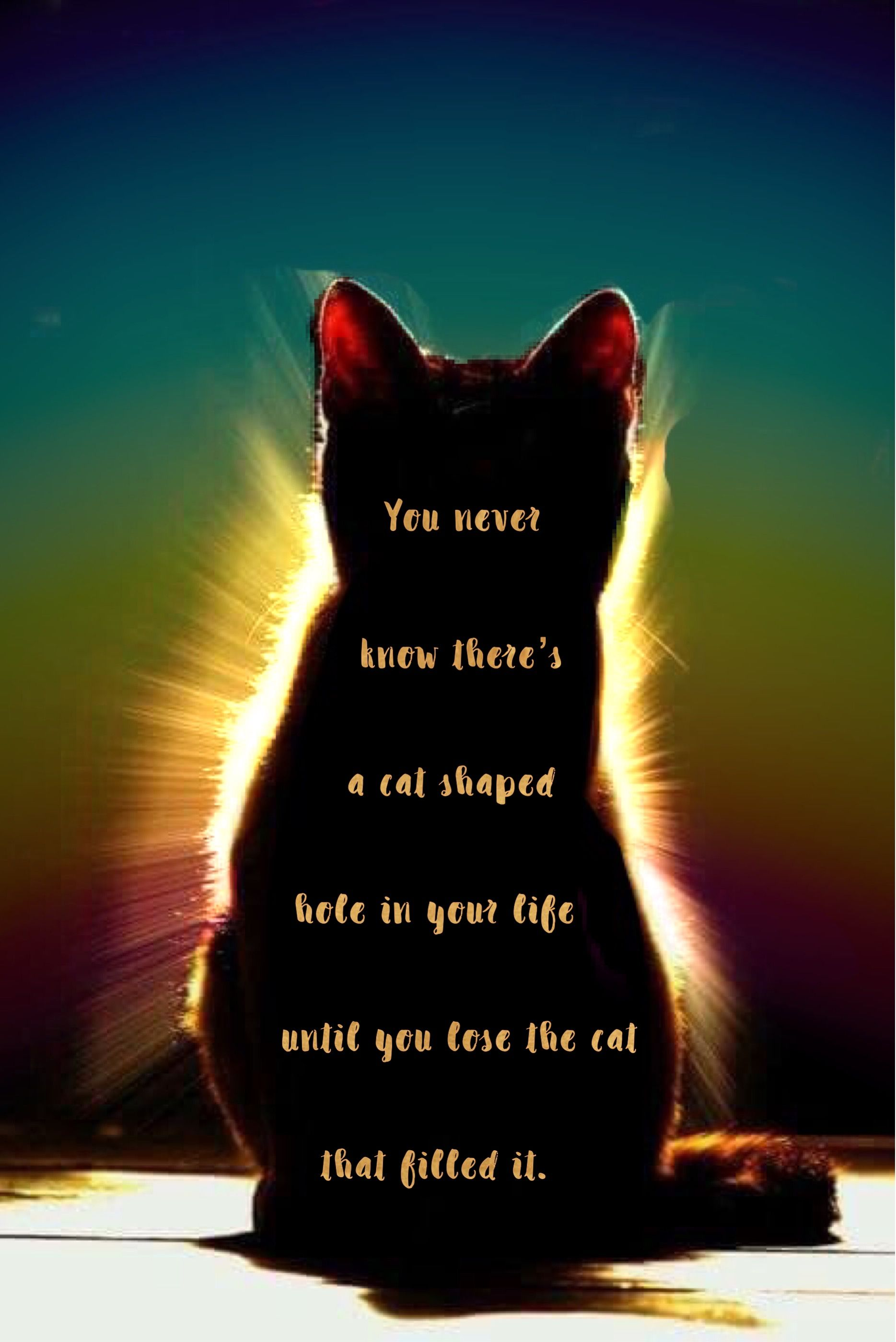You never know you have a cat . . . | Rainbow Bridge | Pet grief ...