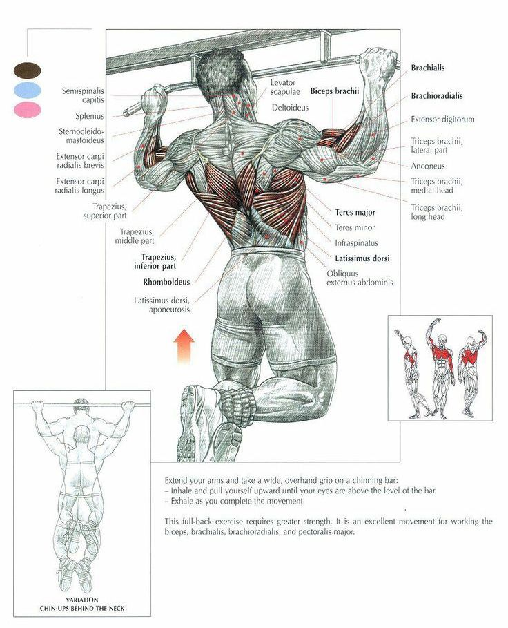 Pull Up Muscles Worked Diagram World War One Trench The Pullup Exercise Anatomy Fitness Trening Pullups Are Recognized As King Of Bodyweight Exercises And Some Will Even Argue That They Re Upper Bod