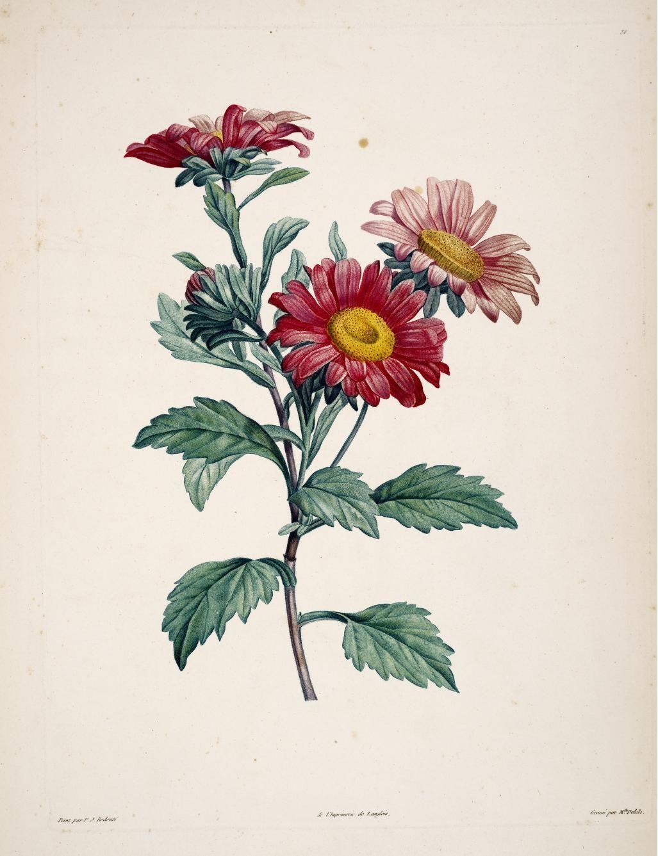 La Botanique De . Rousseau 1805 Jean