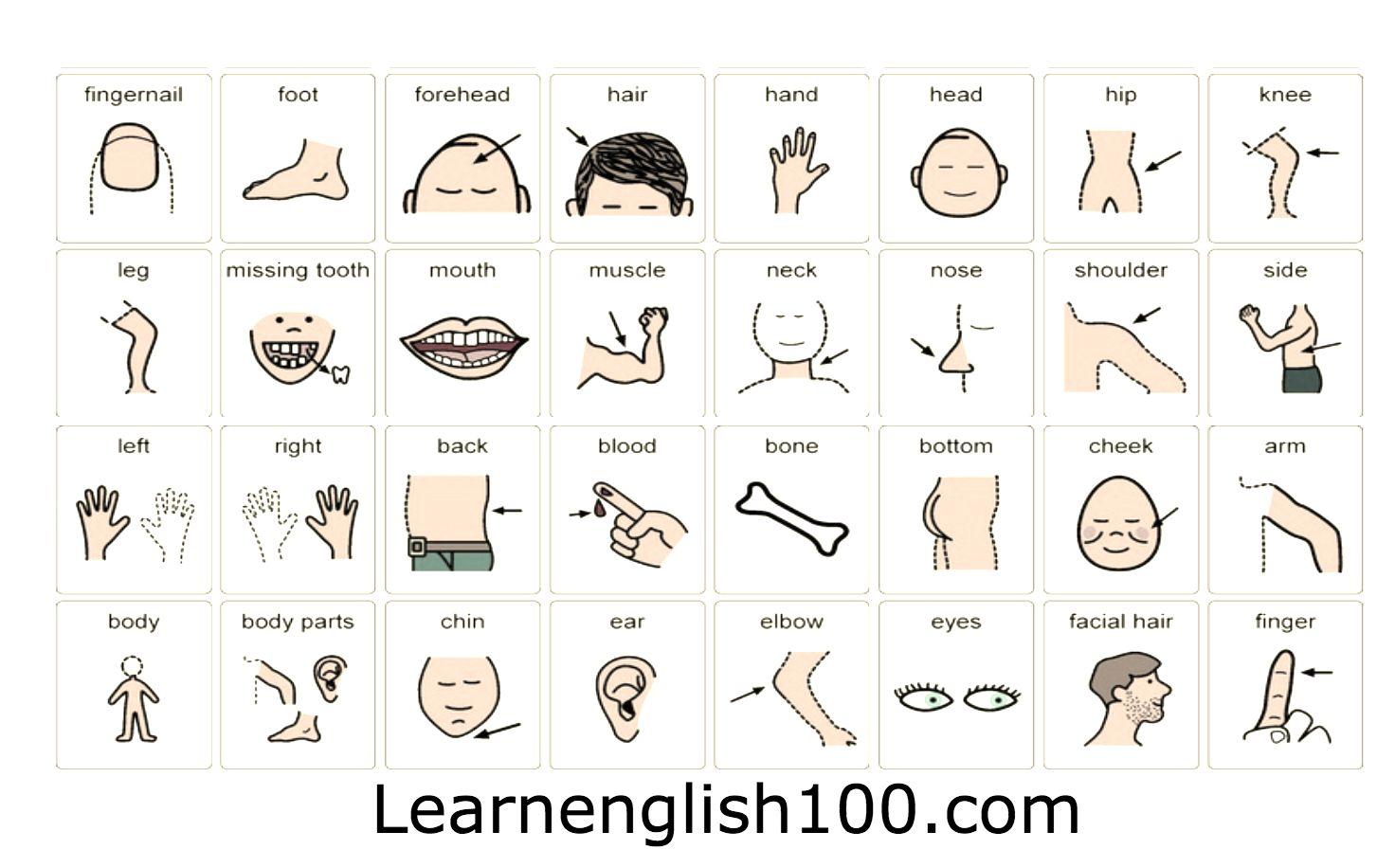 اعضاء الجسم بالانجليزي والعربي بالصور و مترجم Learn English Learning Vocabulary