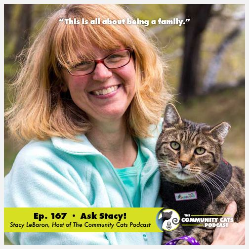 Ask Stacy Stacy Lebaron Host Of Feral Kittens Community