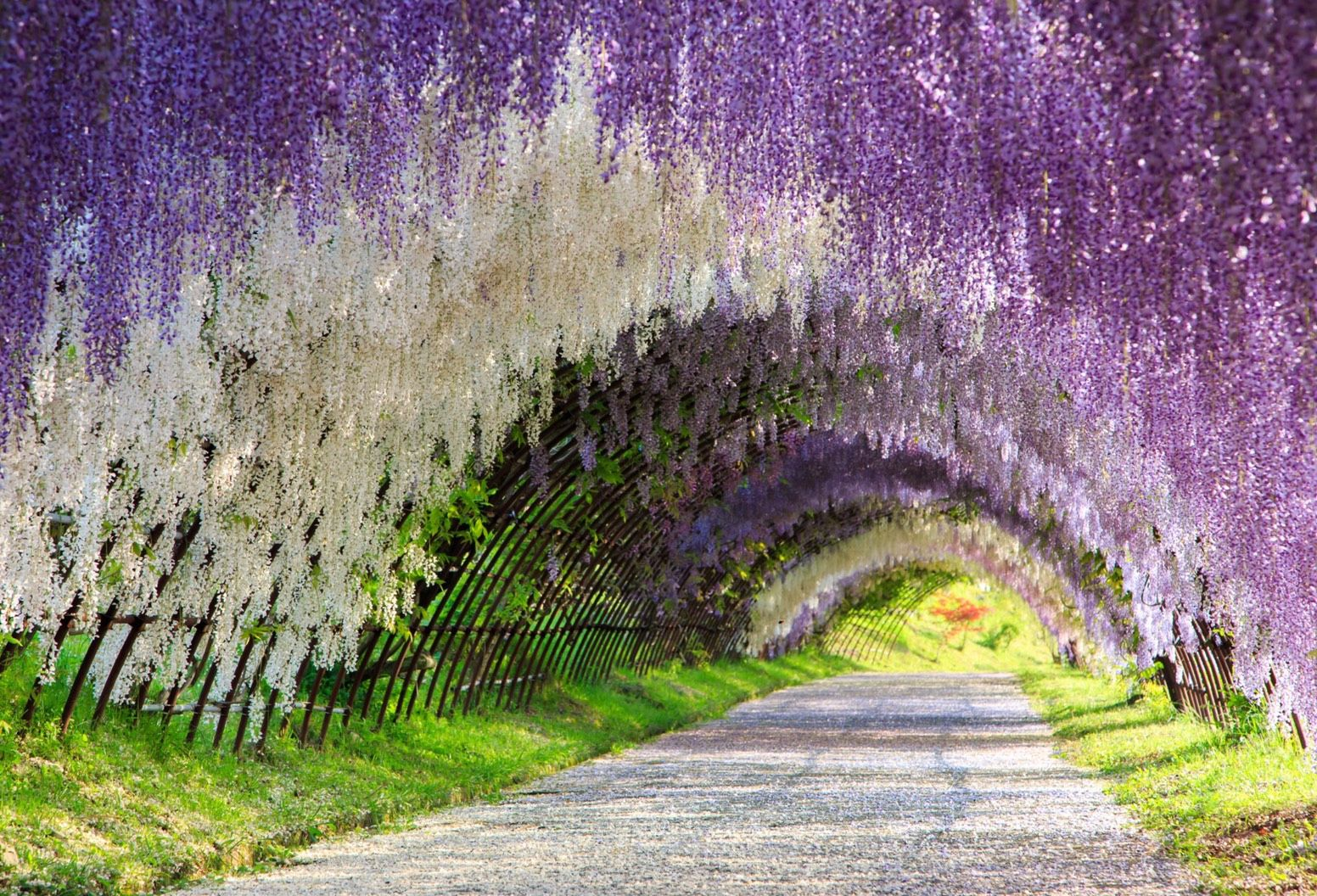 The Great Wisteria Flower Arch, Kawachi Fuji Garden, Kitakyūshū, Japan – Most Beautiful Picture of the Day: April 6, 2017 - http://mostbeautifulpicture.com/2017/04/06/the-great-wisteria-flower-arch-kawachi-fuji-garden-kitakyushu-japan-most-beautiful-picture-of-the-day-april-6-2017/