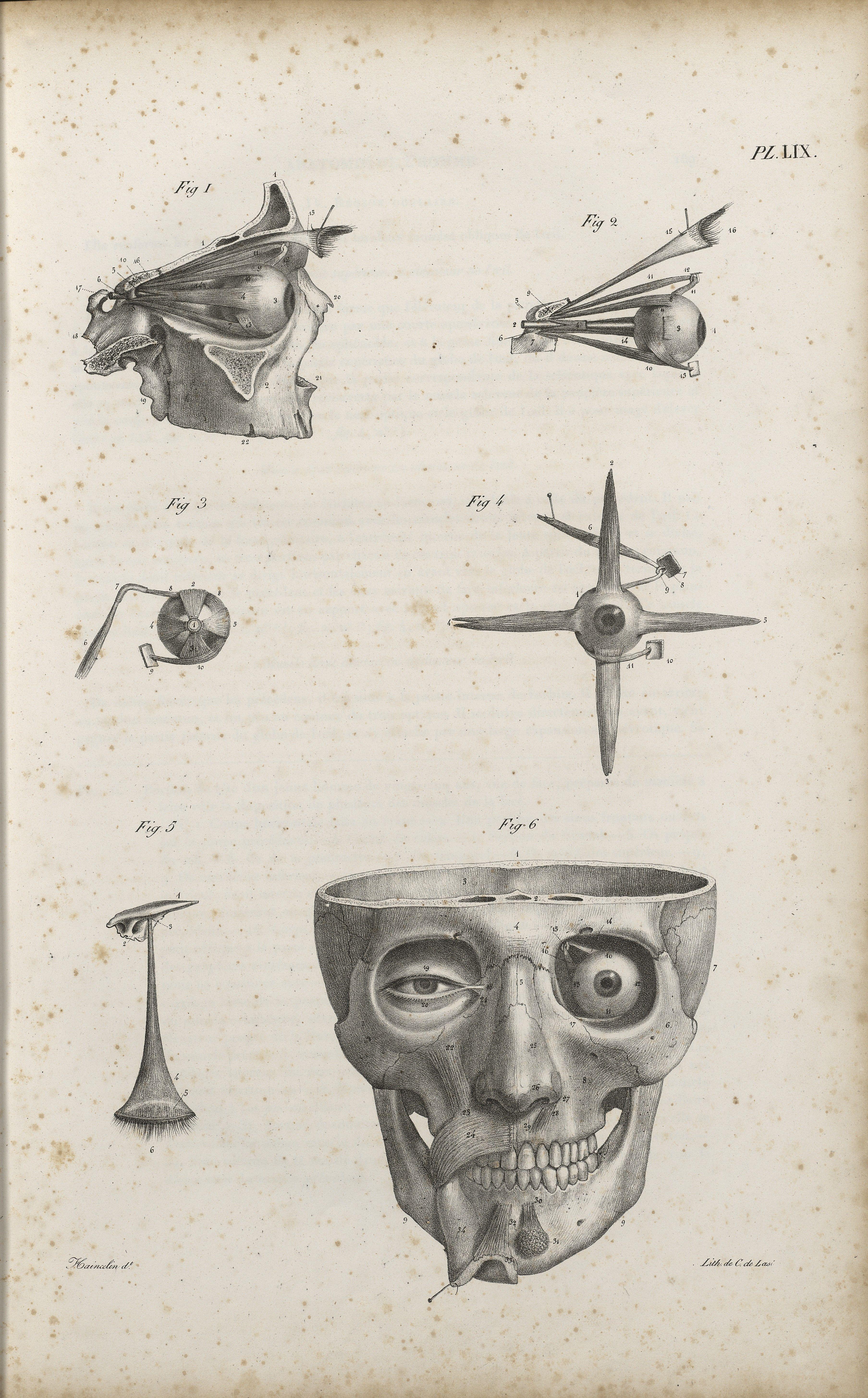 Pin de Seih en bones, anatomy | Pinterest | Anatomía, Curiosidad y ...