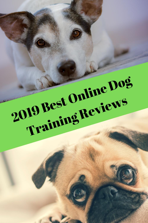 Reviews 02 Online Dog Training Dog Training Training Your Dog