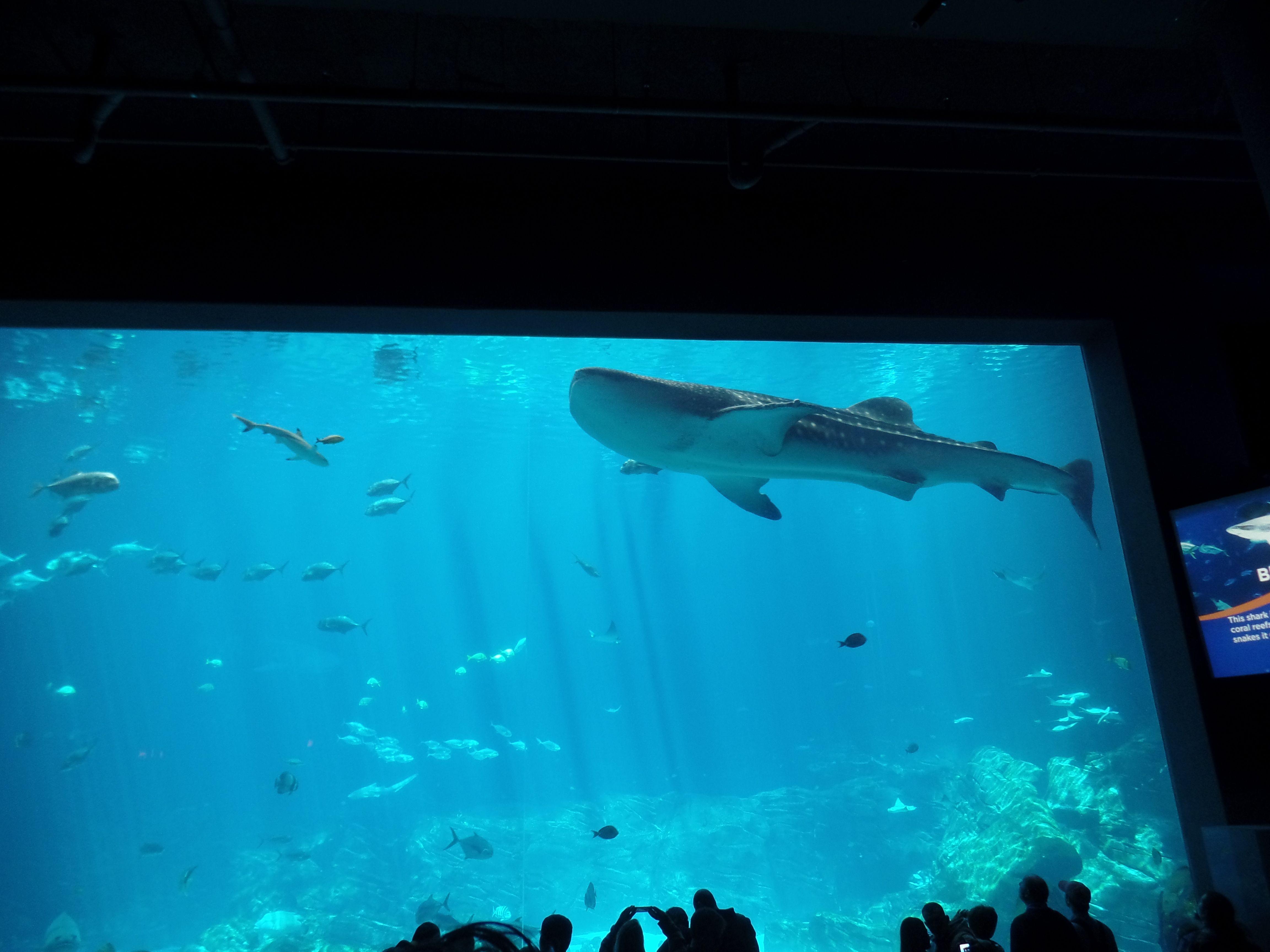 Whale Shark Georgia Aquarium Atlanta, GA | Georgia ...