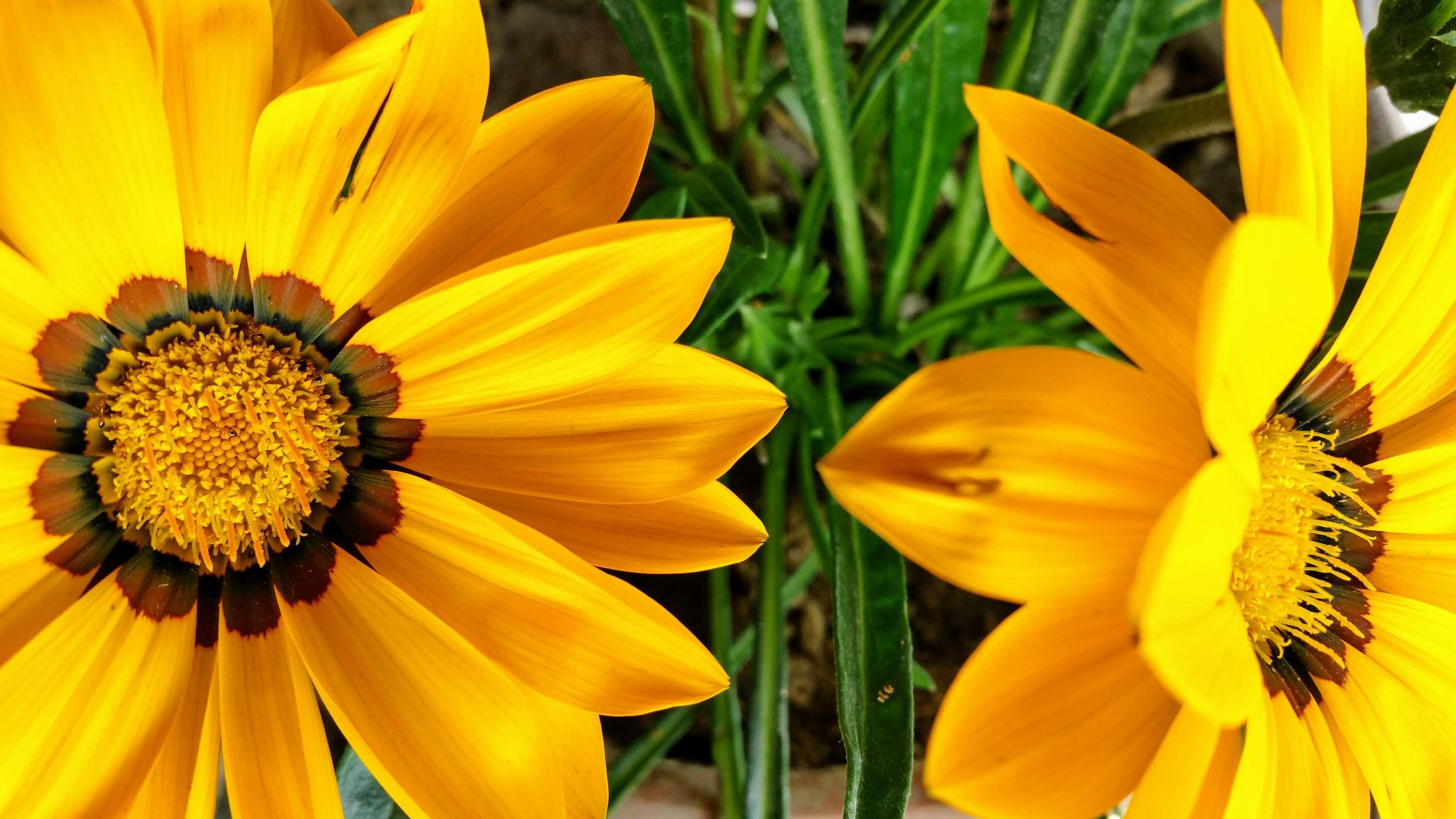 Beautiful beautiful flowers bloom blooming blur bright close beautiful beautiful flowers bloom blooming blur bright close up izmirmasajfo Images