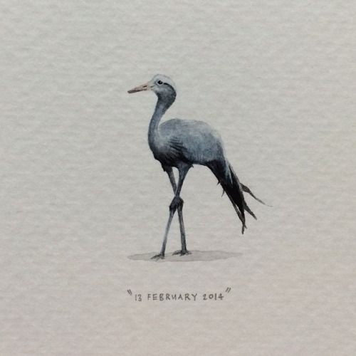 Day 44 : The Blue Crane (Anthropoides paradiseus) is South