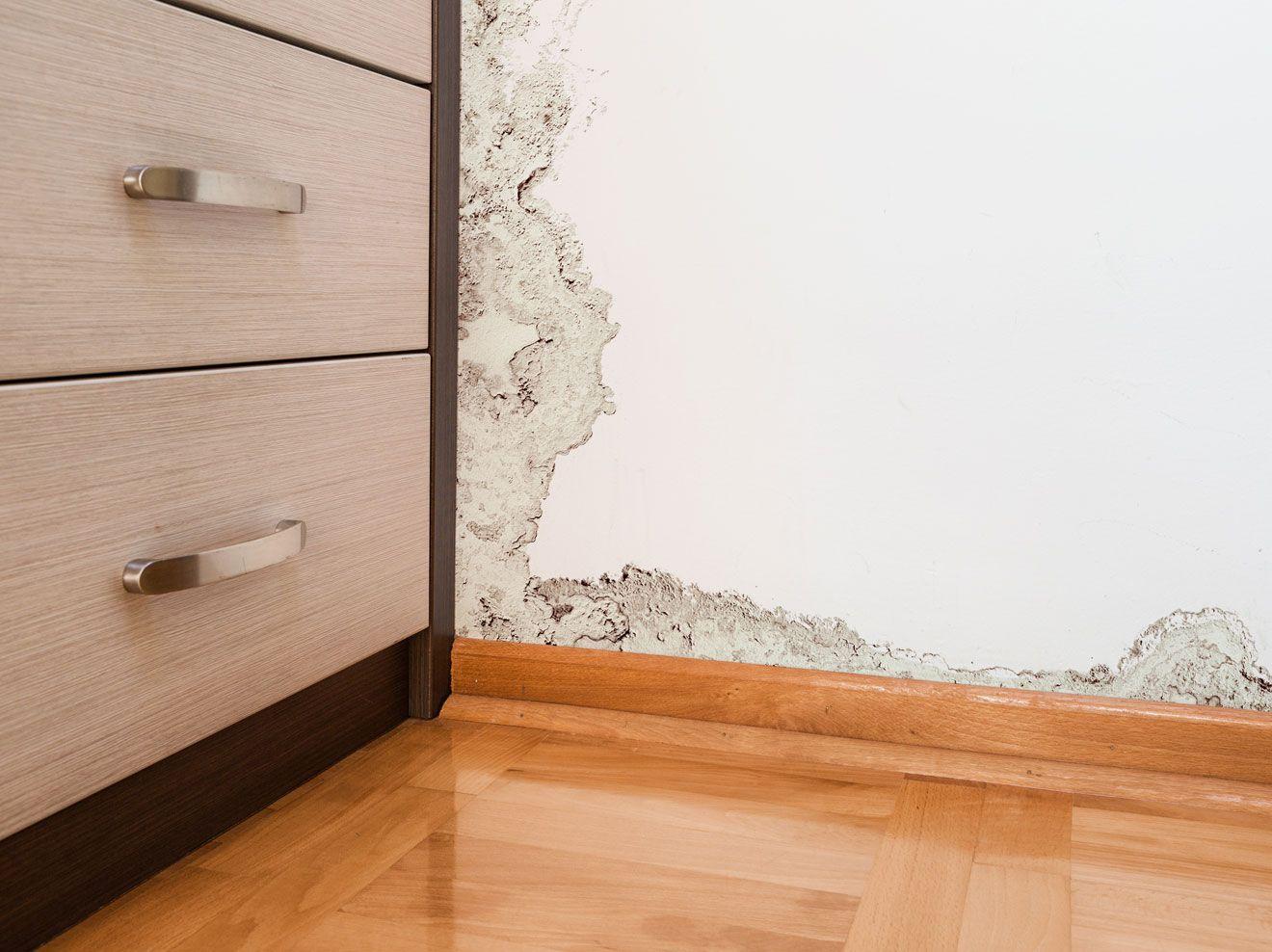 Schimmel Im Haus Entfernen Und Vorbeugen Schimmel Im Haus Schimmel Wohnung Und Haus Renovieren Kosten