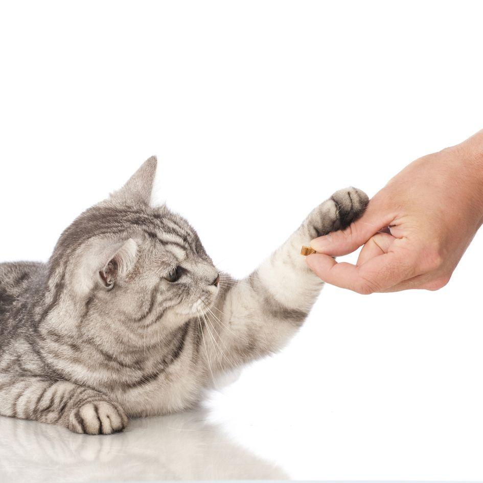 Leckerli Bei Niereninsuffizienz Hund Und Katze