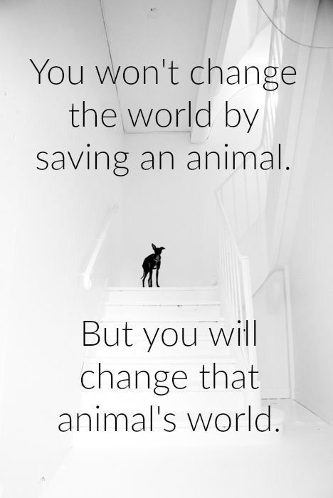 You won\'t change the world by saving an animal... But you ...
