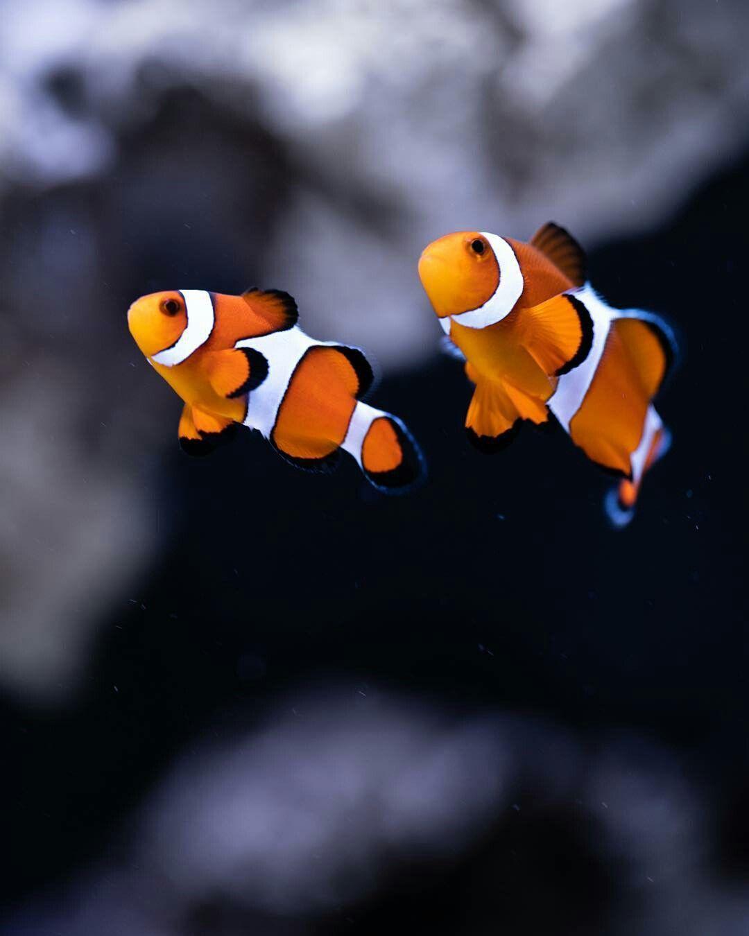 Tropicalfishocean Tropical Fish Saltwater Fish Tanks Aquarium Fish Tank