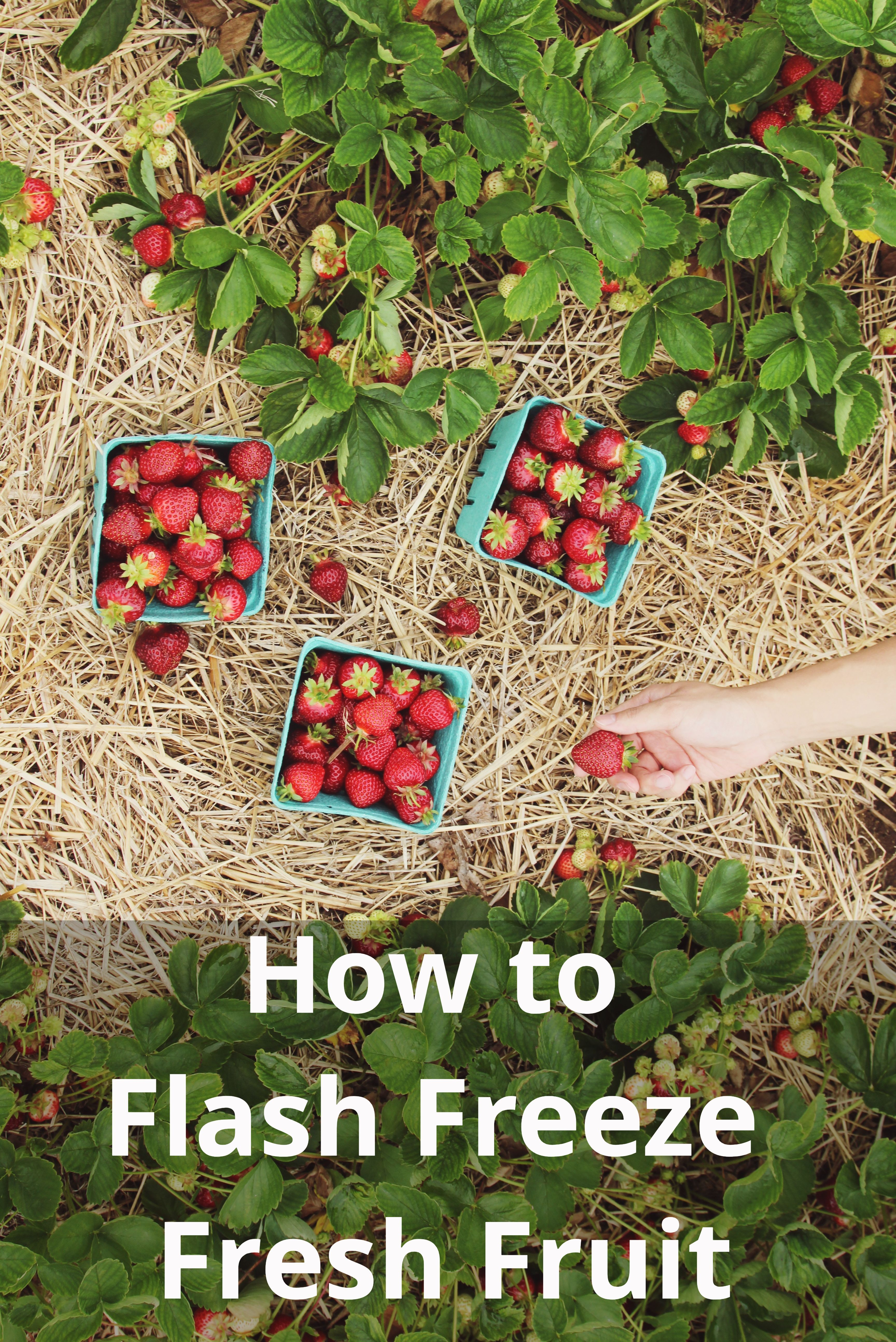 Going berry picking? With dry ice, you can flash freeze