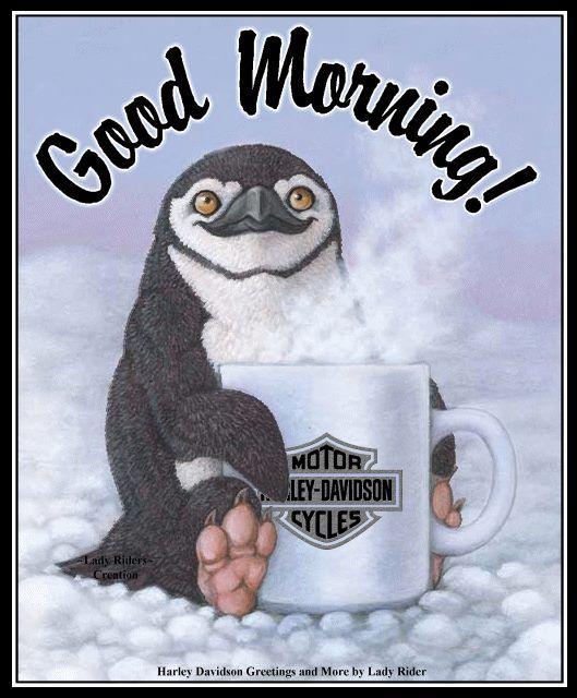 доброе утро картинки пингвины находится