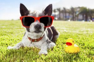 Sun Bathing Beauties:  Must-Know Info About Pet Skin Cancer