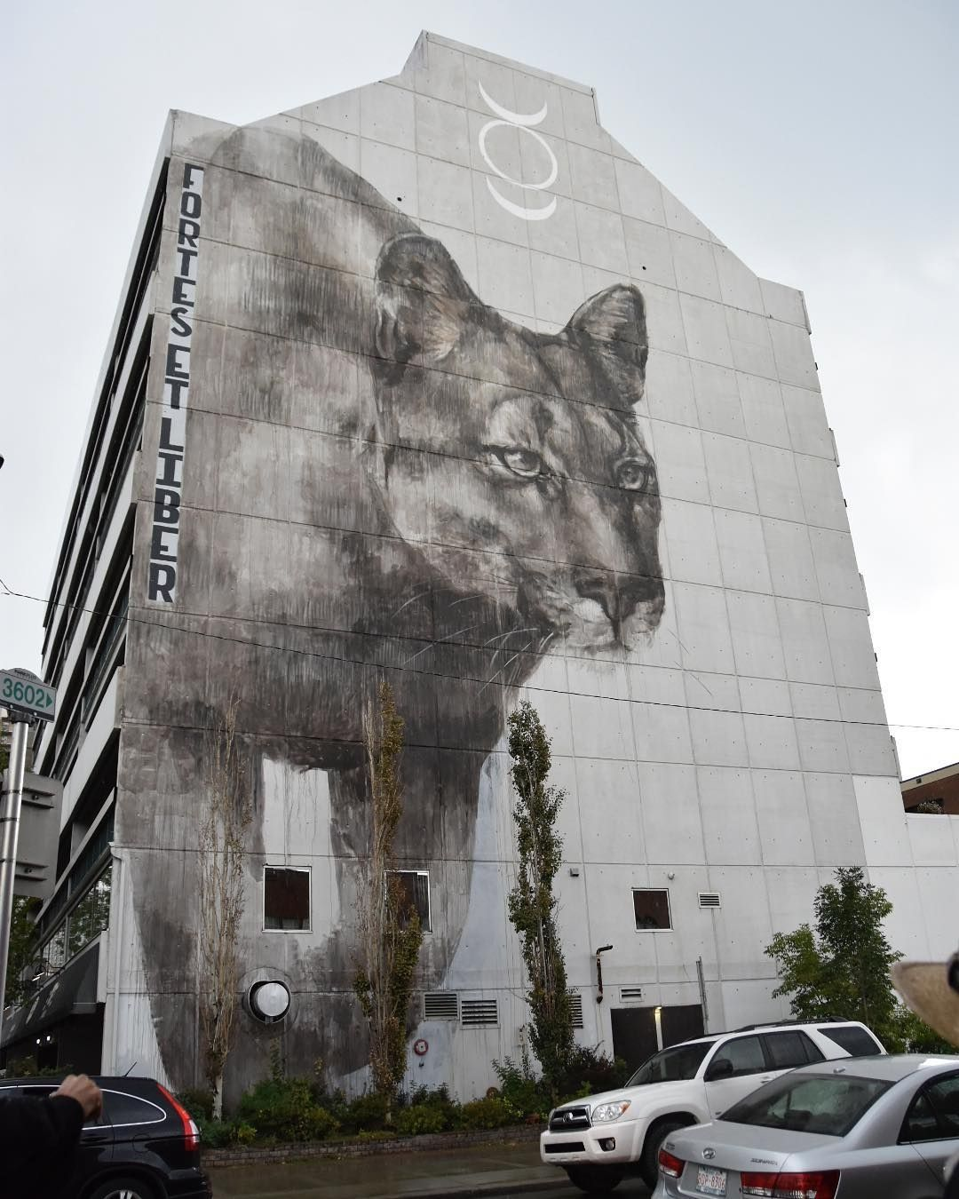 3d street art street art graffiti street artists