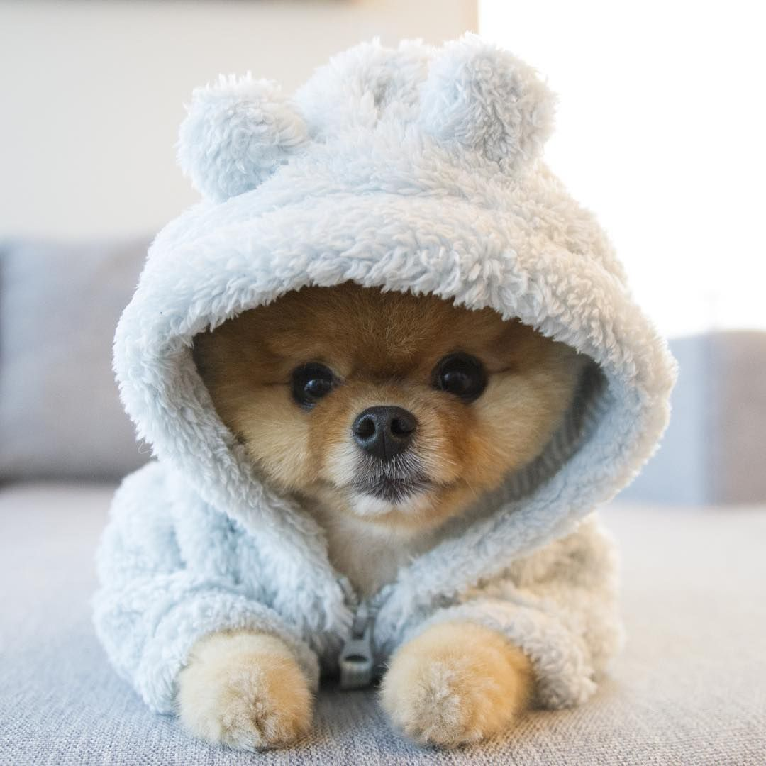 17 Tiny Pets That Will Soften Your Cold Heart Cute baby