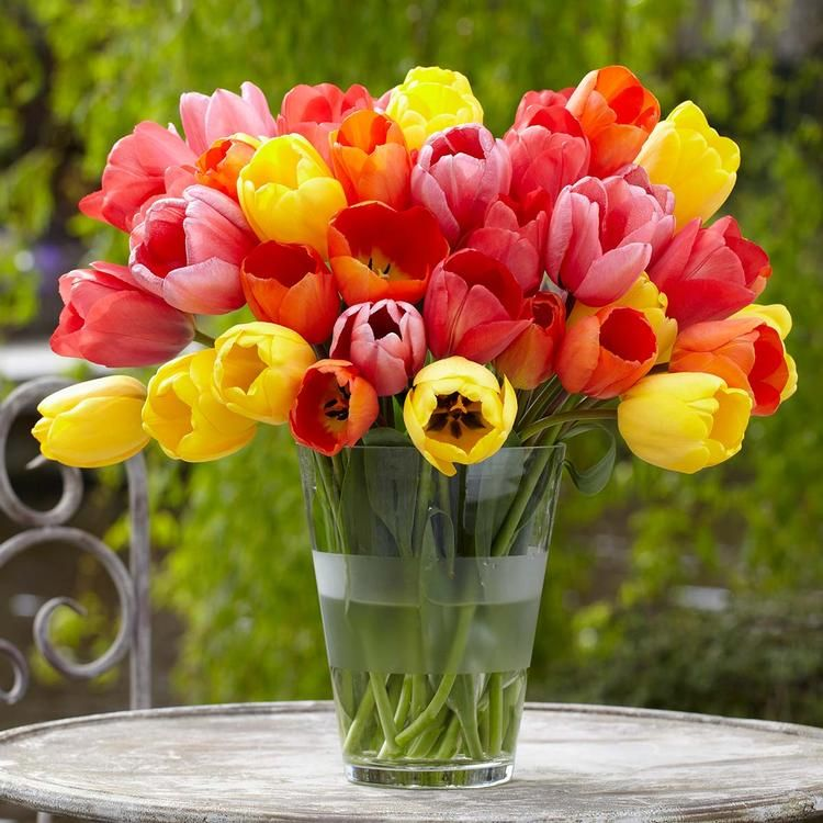 Tulip Bulbs For Sale Tulip Bulbs For Sale Tulip Bulbs
