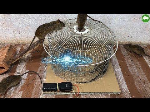 Piège à rat électrique / travail fait maison de piège à souris électrique avec la batterie 12V ...