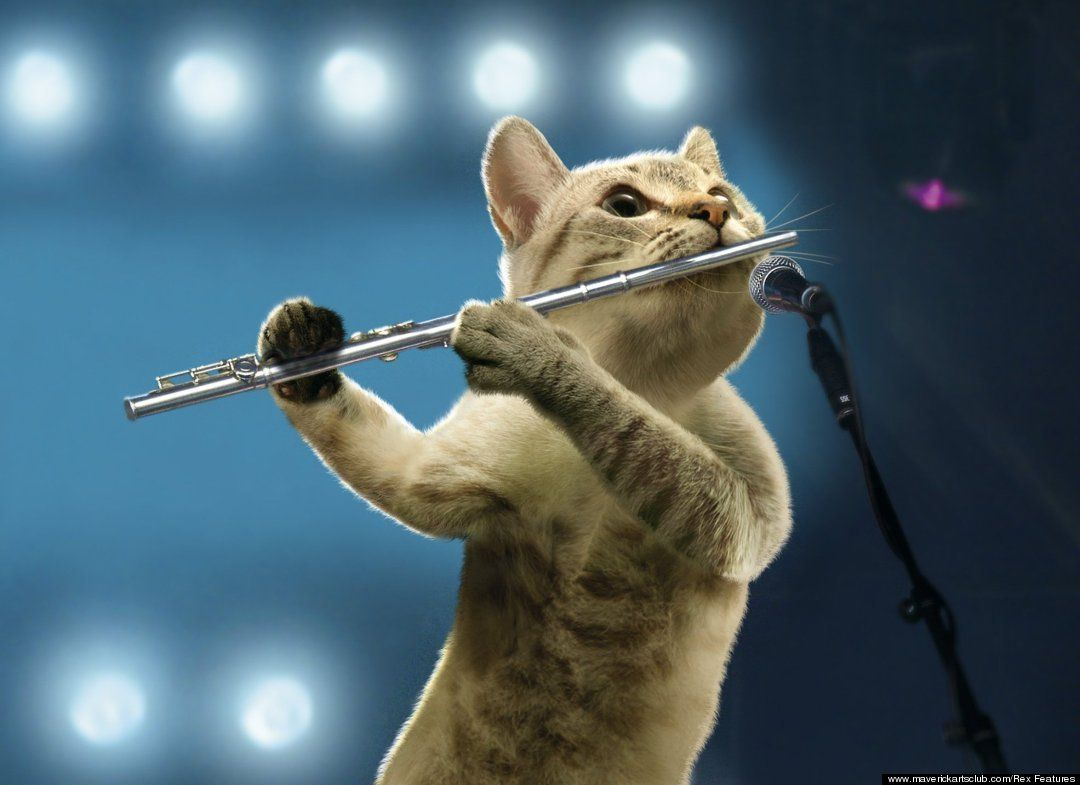 Some Cats Were Born To Play Jazz Flute Cats Music Cats Musical Cat Playing Cats