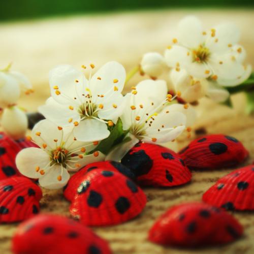 Flower Pink Ladybird Nature Garden Dress It Up Craft Buttons LADYBUG CROSSING