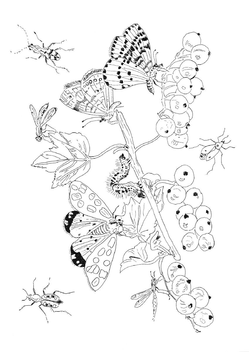 Pippa Rossi Lost Garden Adult Coloring Book Insect By Pippa Rossi Dyjbkc 850x1200