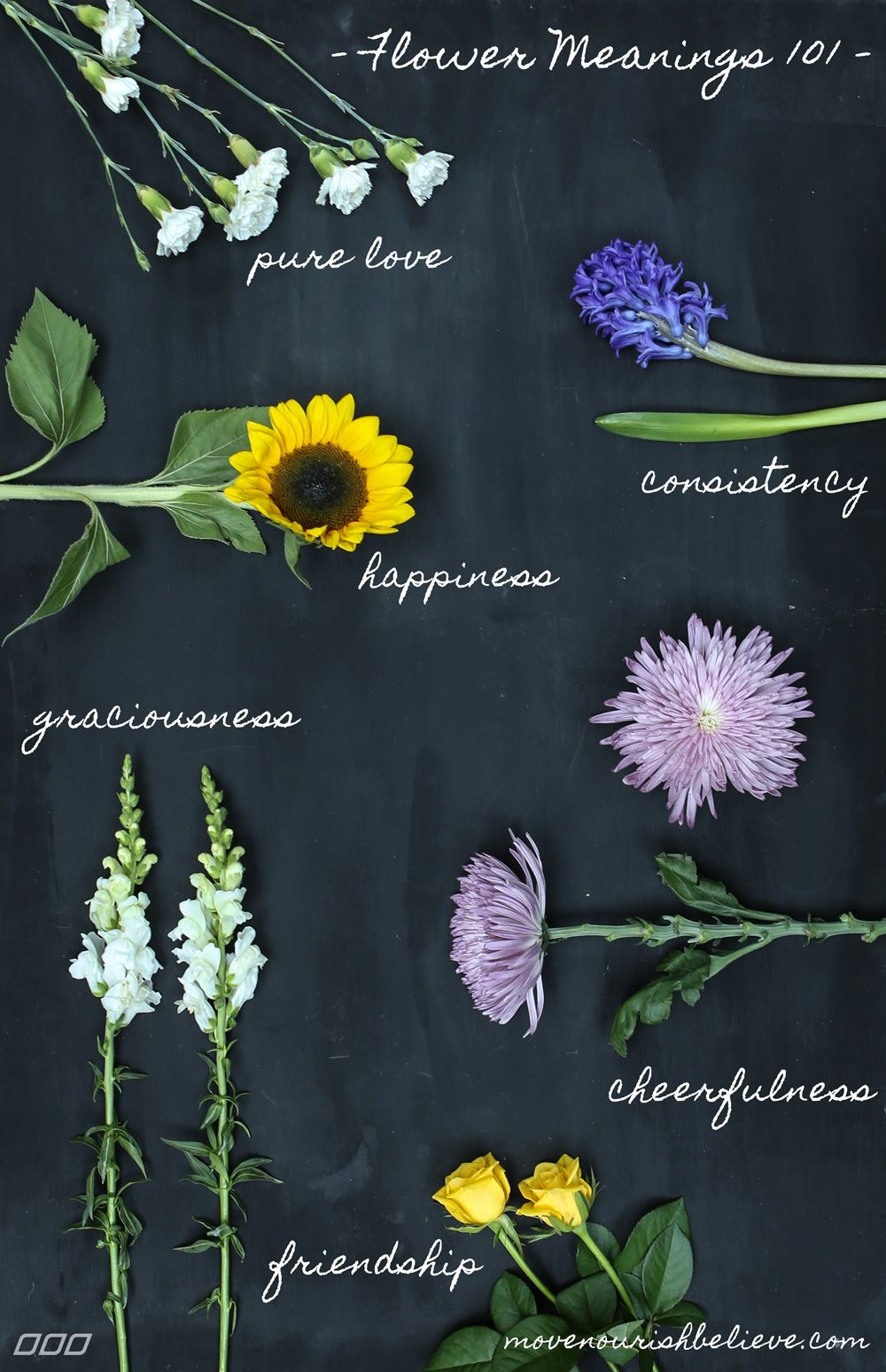 Flower meanings decoded the secrets of your favourite bloom home flower meanings decoded the secrets of your favourite bloom move nourish believe izmirmasajfo