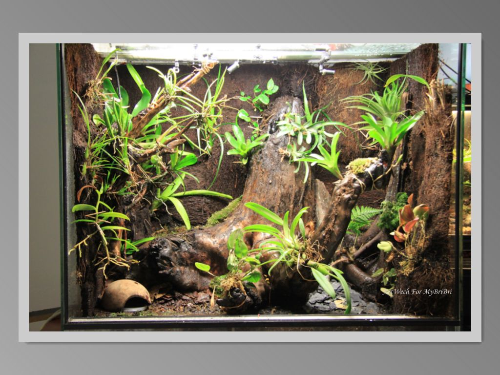 Imagep terrarien pinterest terraria and vivarium