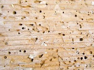 Best Termites Control Tips On How To Get Rid Of Termites