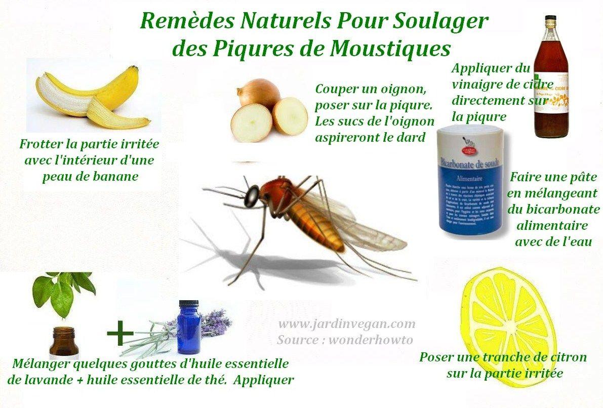 rem des naturels pour soulager les piqures de moustiques nature et sante wellness et health. Black Bedroom Furniture Sets. Home Design Ideas