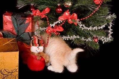 #Navidad2014 Como proteger a tu mascota en Navidad » http://diciembrenavidad.com/como-proteger-tu-mascota-en-navidad/ #TipsNavidad