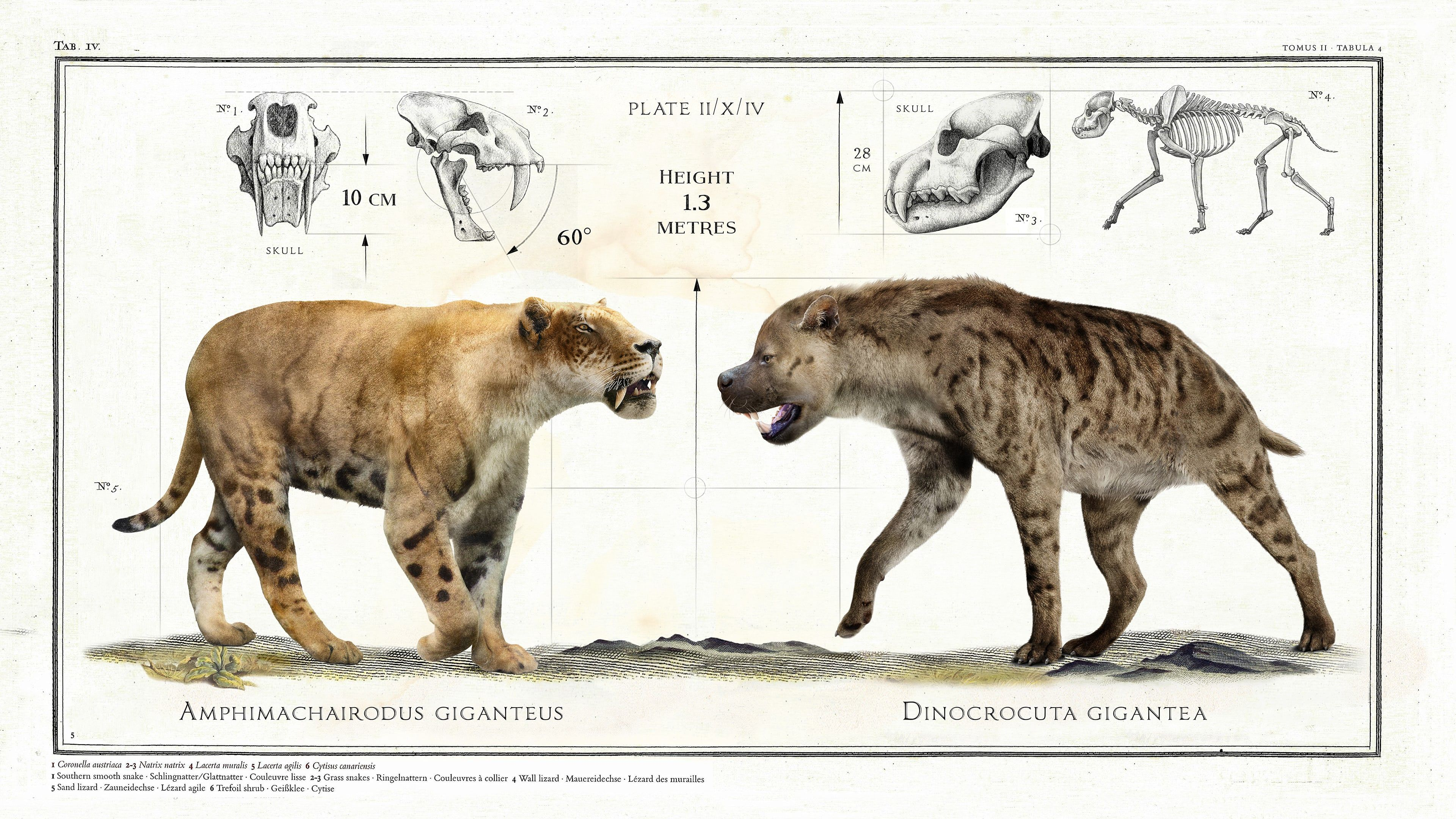 When Size Does Matter Big Beasts Last Of The Giants
