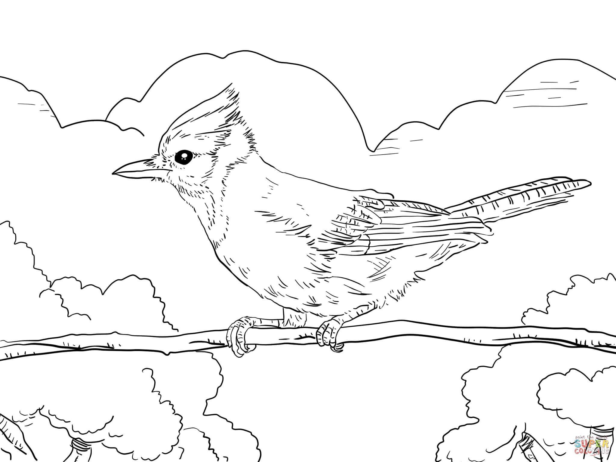 Perched Blue Jay Coloring Page Free Printable Coloring Pages