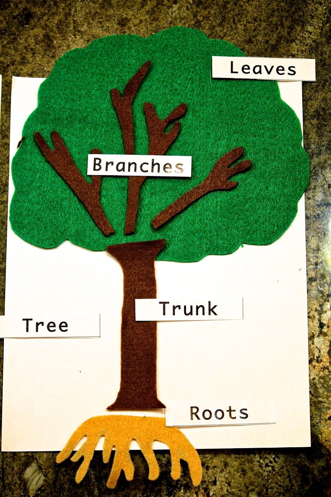 Diy Montessori Felt Parts Of A Tree