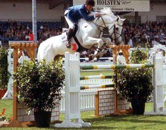 Carthago Z - Show Jumping Stallion