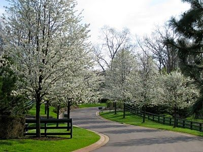"""Still Waters--Notes from a Virginia Shire: """"Pale Spring"""" (image from raffupdate.blogspot.com)"""