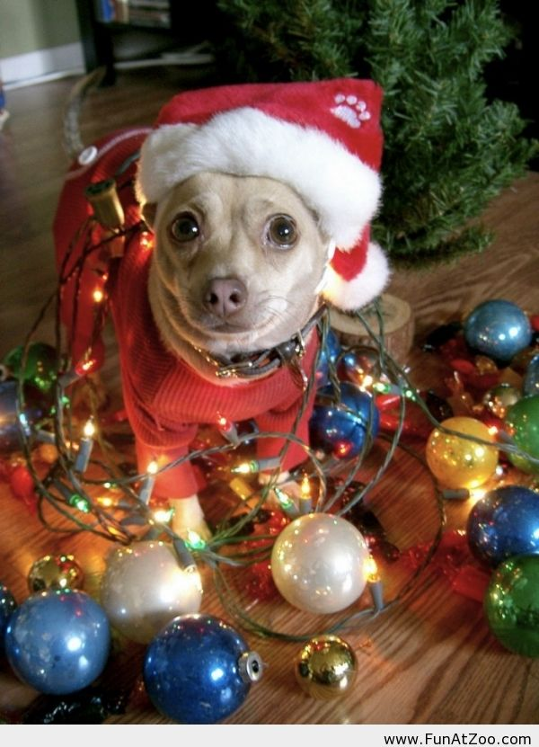 Dog Wishes You Happy Holidays And A Merry Christmas Funny