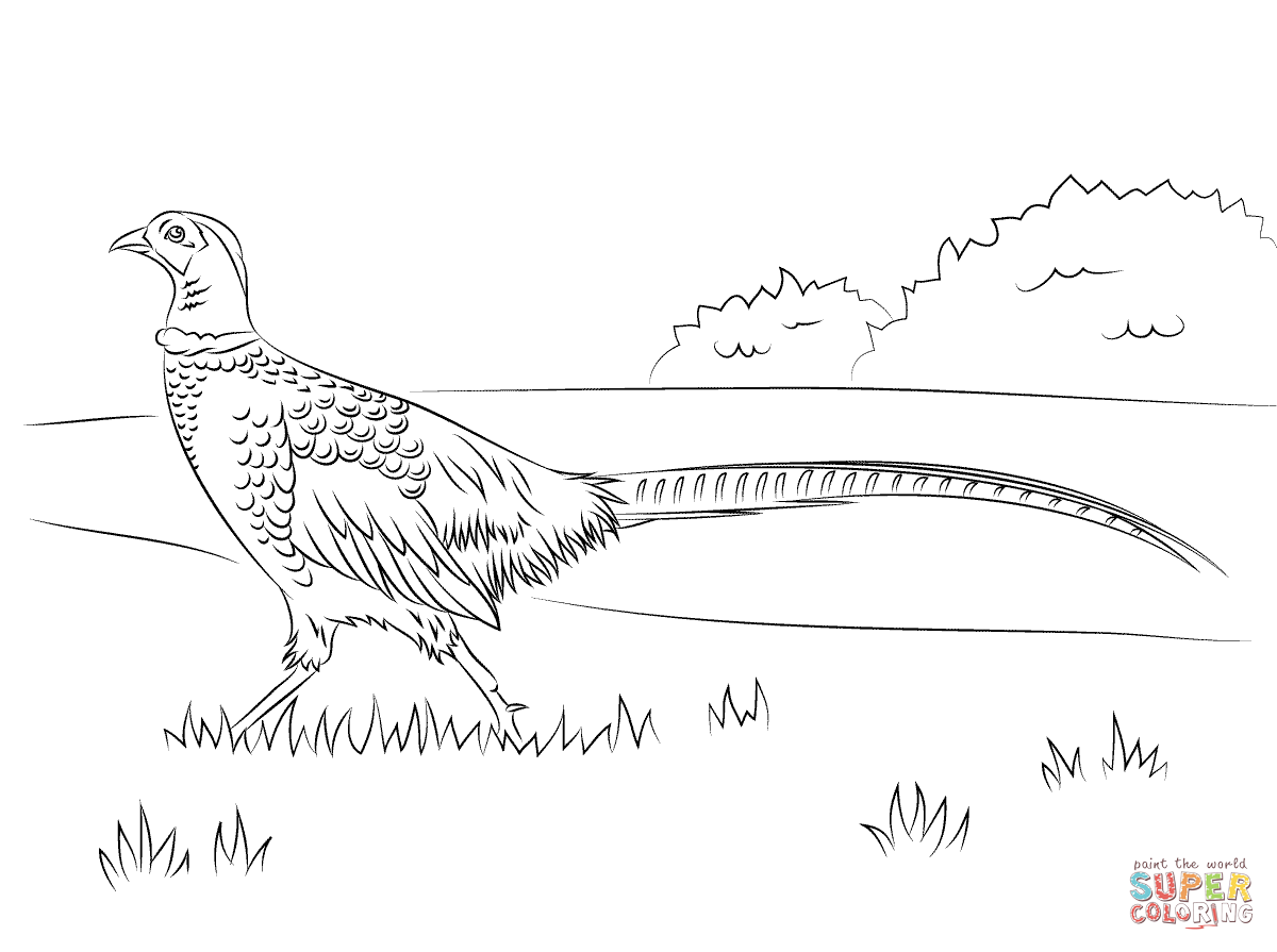 Walking Pheasant Outlines Pinterest Pheasant