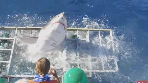 Momento en el que el tiburón blanco logra salir de la jaula, aunque resultó herido.