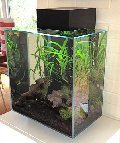Customer image gallery for fluval edge 12 gallon aquarium for Aquarium edge