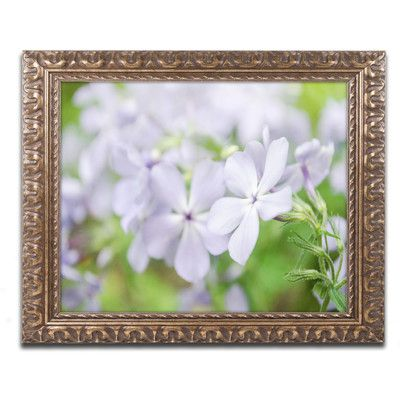 "Trademark Art Soft Focus Phlox Carolina Framed Photographic Print Size: 16"" H x 20"" W x 0.5"" D"