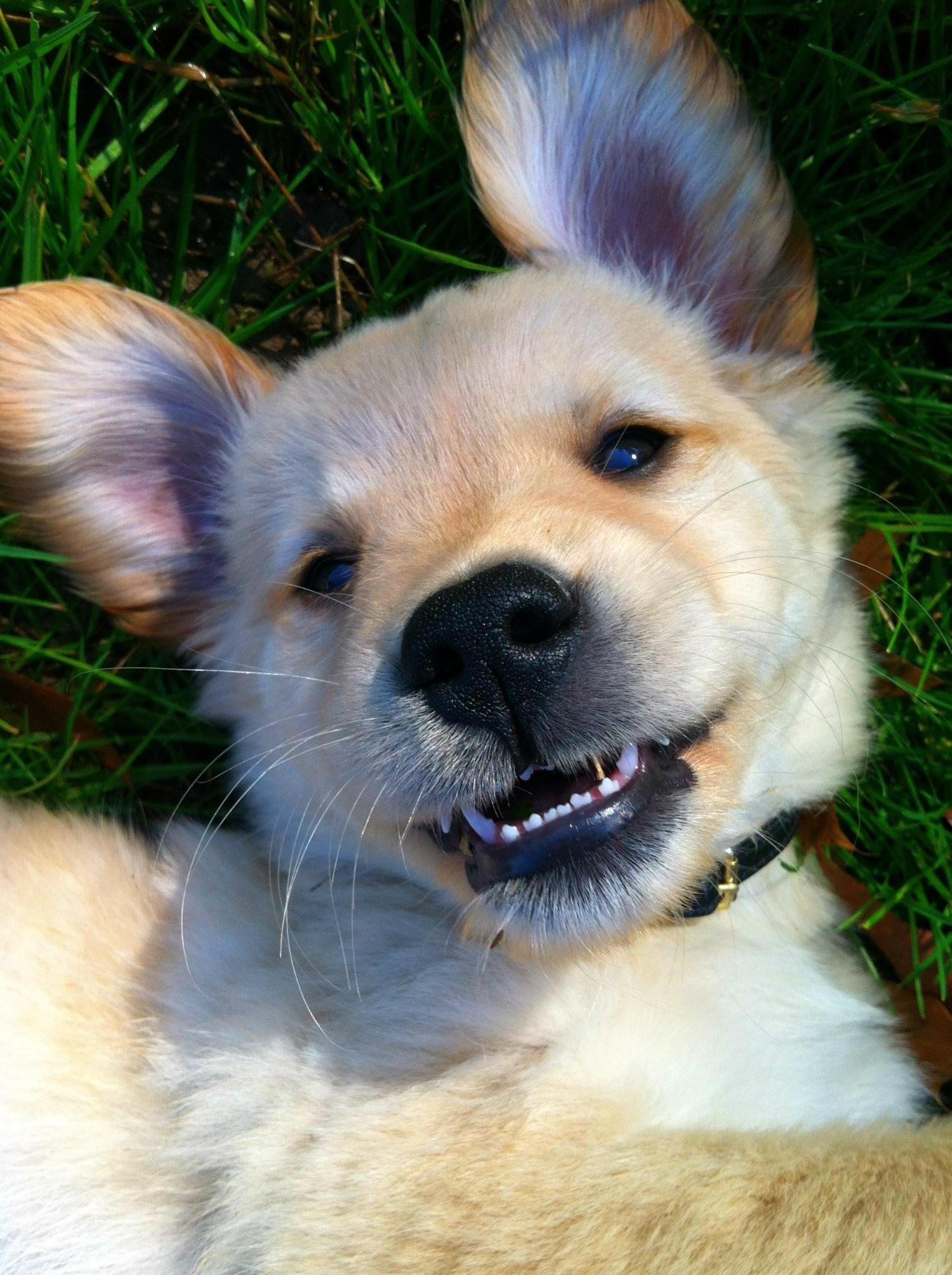 The Golden Smile http://ift.tt/2dtLz5o