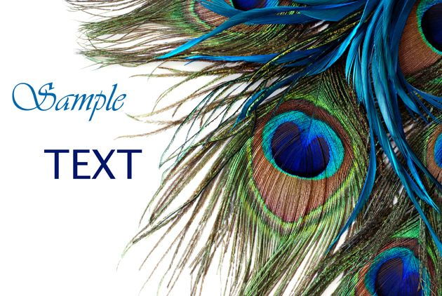 HD picture download Peacock feather card blue  File size