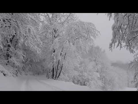 Relaxing Snowfall 2 Hours Sound Of Light Wind Breeze And Falling Snow In Forest Part 2 Youtube Snowfall Snow Forest