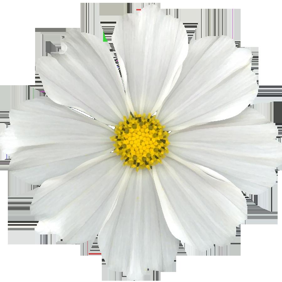 How to scrapbook flowers - Flower