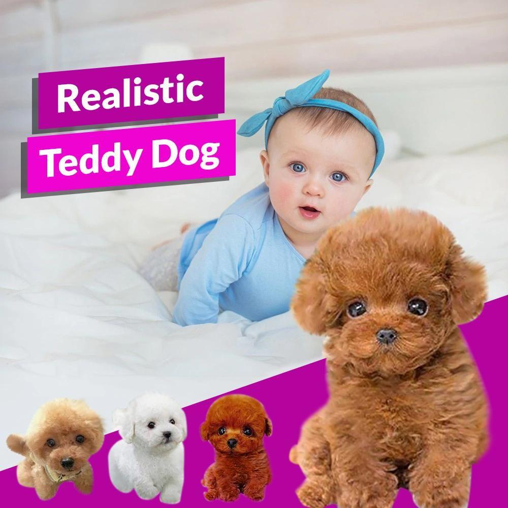 Realistic Teddy Dog Evehousehold Teddy Dog Teddy Teddy Bear Puppies [ 1000 x 1000 Pixel ]