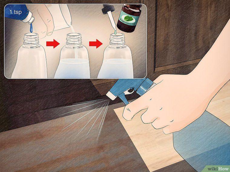 25+ parasta ideaa Pinterestissä Ameisen im haus bekämpfen - was hilft gegen ameisen in der küche