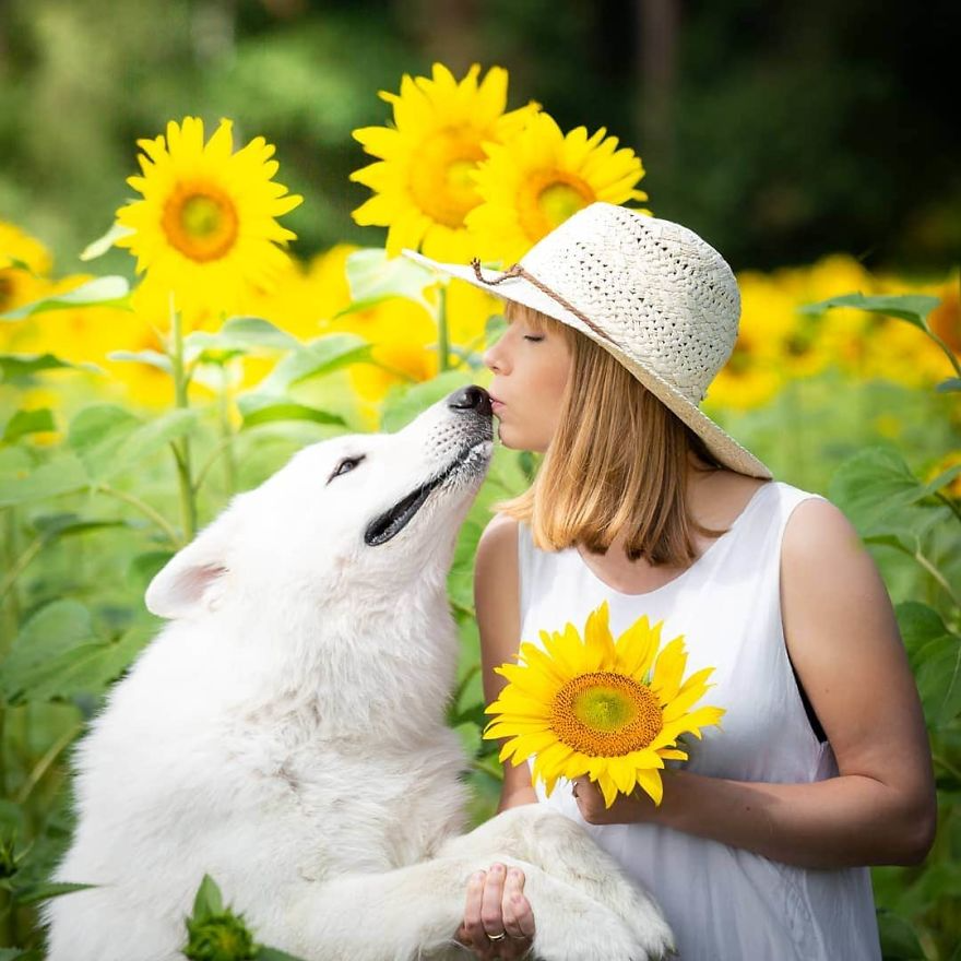 woman s photoshoot of her three dogs with sunflowers goes hilariously wrong when they discover how tasty the flowers are in 2020 dog photoshoot she dog dog jokes pinterest