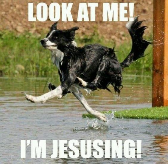 97f2ab06e6362bbf07bbd889bf7233e5 border collie running dog meme dogs pinterest collie and dog